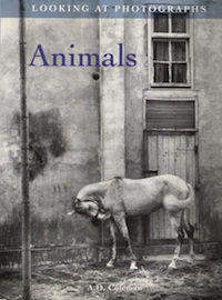 "A. D. Coleman, ""Looking at Photographs: Animals"" (1995), cover"